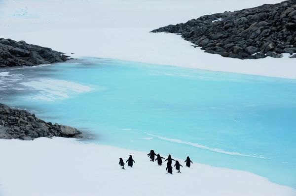 Adelie penguins make their way along the edge of Blue Lake near Mawson's Hut in Commonwealth Bay, Antarctica
