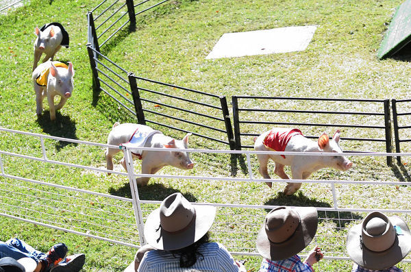 A pig race is seen at the Queensland Royal Exhibition Show, known locally as the EKKA, in Brisbane, Monday, August 13, 2018. (AAP Image/Dave Hunt)