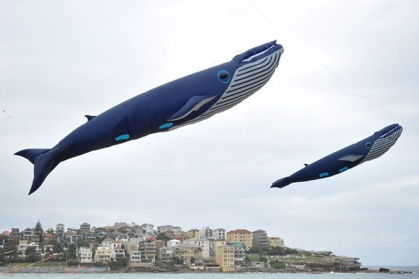 Kites in the shape of blue whales fly during the 35th Annual Festival of the Winds at Bondi Beach in Sydney