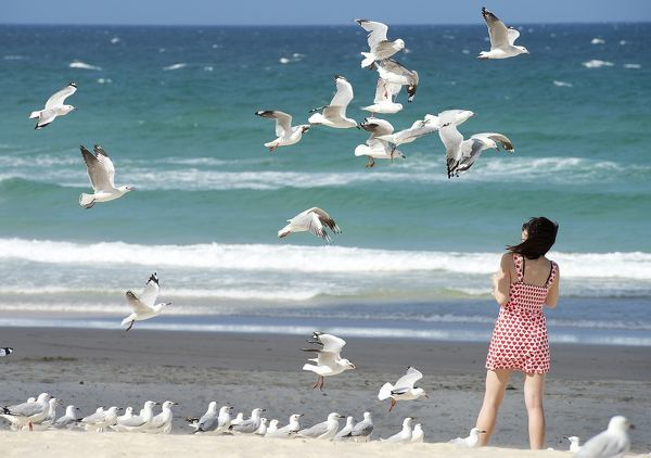 A woman looks on to seagulls at Surfers Paradise beach on the Gold Coast