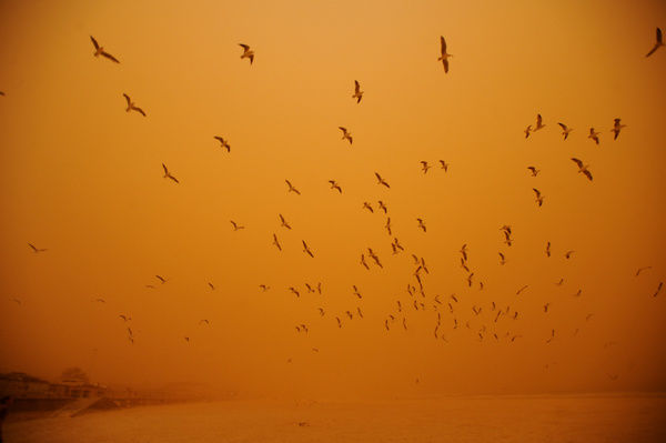 Seagulls reluctantly take flight in the high winds as a dust storm blankets Bondi Beach in Sydney, Wednesday, Sept. 23, 2009. The dust is being blown from dry farm land in western and southern parts of NSW and eastern South Australia