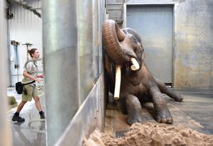 Melbourne Zoo Asian Elephants