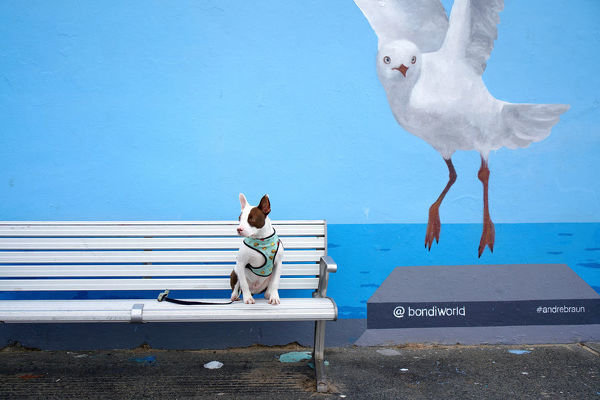 A dog is seen sitting on a bench along Bondi Beach in Sydney on Saturday, June 9, 2018. (AAP Image/Jeremy Ng)
