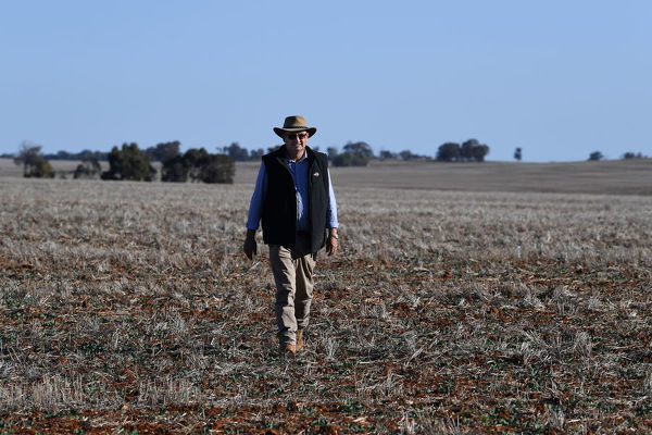 **FILE**    Crop farmer Neil Westcott walks across his failed Canola crop near Parkes, Tuesday, August 14, 2018. New South Wales has been 100% drought declared. NSW crop farmers are feeling overlooked and neglected by the public