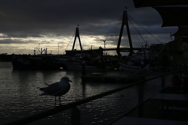 The Anzac Bridge is seen while a seagull perches on a rail at the Fish Markets in Sydney during the winter solstice in Sydney, Saturday, June 22, 2019. (AAP Image/Steven Saphore)