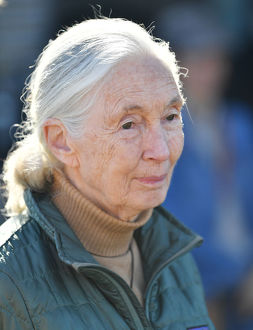 weather/jane goodall monarto zoo annoucement