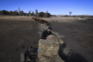 NSW DROUGHT FEATURE BRAIDWOOD